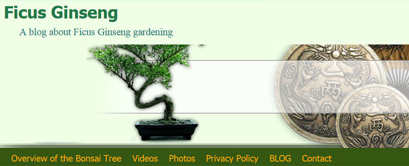 Ficus Ginseng - all about bonsais